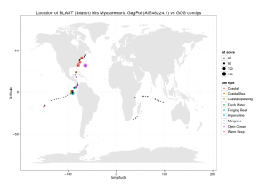 Searching for the Steamer retroelement in the ocean metagenome